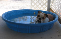 Wrinkles just relaxing in her pool