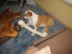Wrinkles has never seen a bone quite this large before